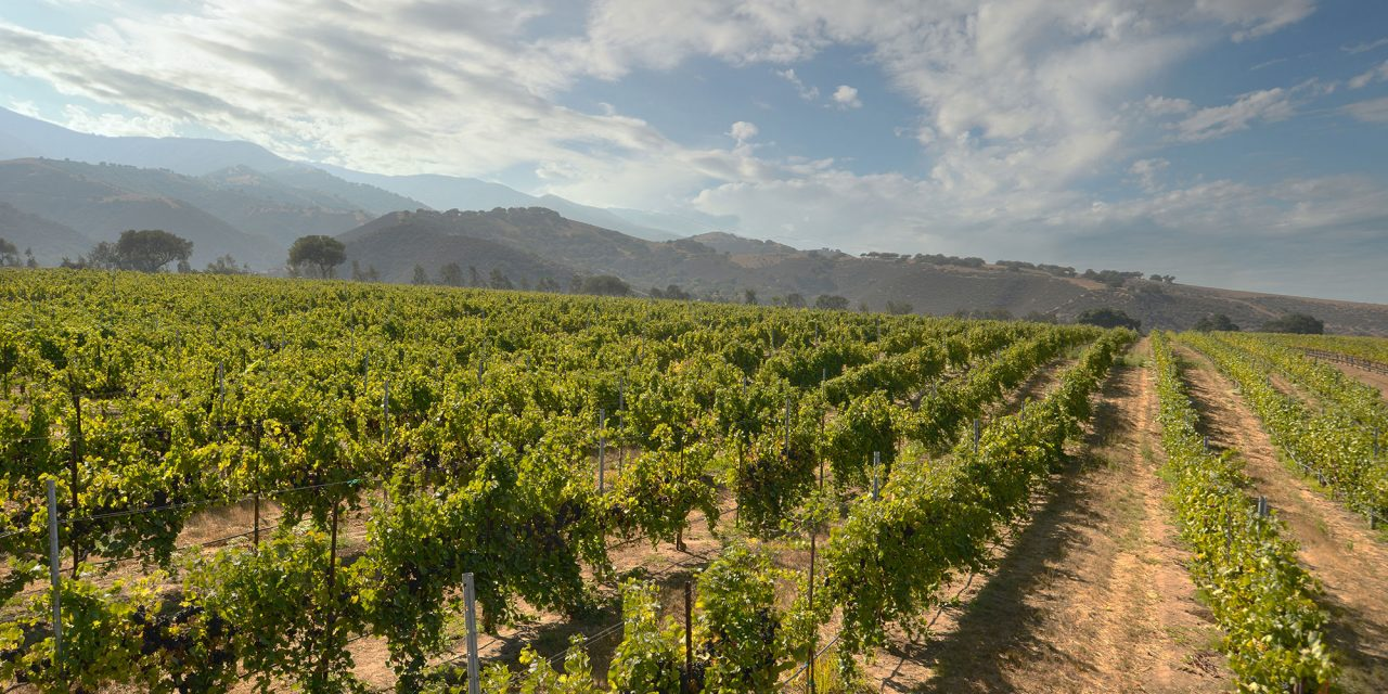 Cool Wine Country: Santa Lucia Highlands