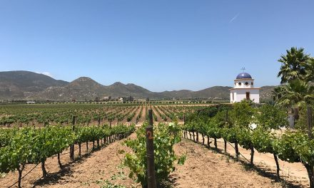 Baja California Adventure: Wines of Valle de Guadalupe