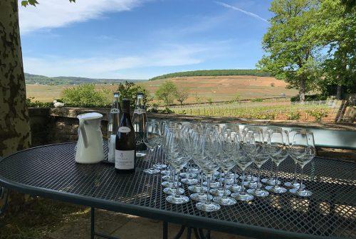 BurgundyTastingVineyard