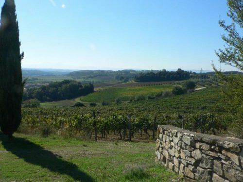 Italy Villa Argiano vineyards