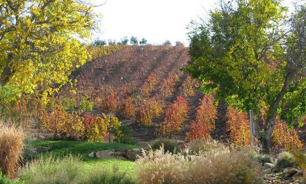 Post-Harvest Fall Colors in Paso Robles
