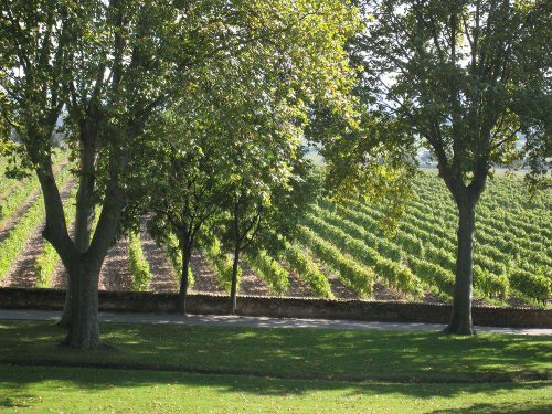 La Nerthe Vineyards Provence France