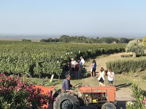 Mendoza Blousson Vineyard Harvest