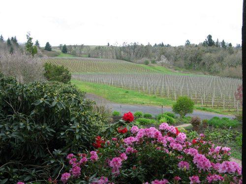 Oregon Cristom Vineyards 20120413