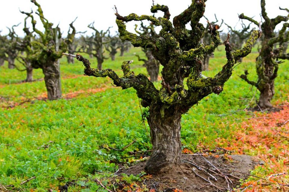 Lodi – the Motherlode of Affordable California Wines