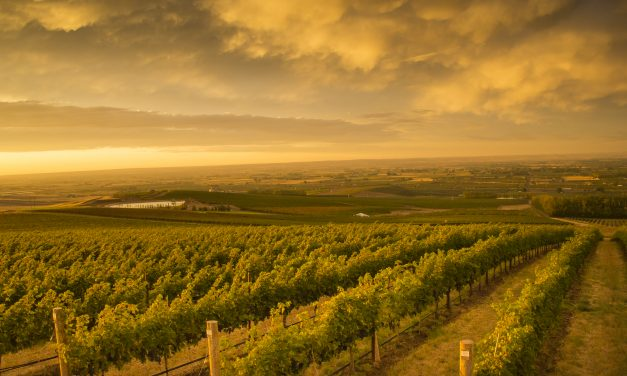 Syrah Smackdown: Appreciating a Sense of Place and Personality