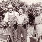 Lodi Reds Redux; New Discoveries from California